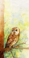 Chouette - Owl by LaureCacouault