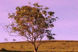 tree at the tea garden by dogshitontheroad