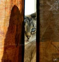 Peek by Momenti-Photo