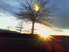 tree caught on fire by setting sun by DMVCustomDesign