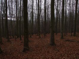 Oechsenberg - forest 1 by sacral-stock