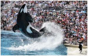 Sea World 1 by JWhile