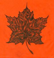 Maple Leaf Drawing by Arboris-Silvestre