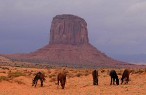 Monument Valley Wild Horses by Rayroze