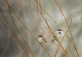 Two in a Bush by TimLaSure