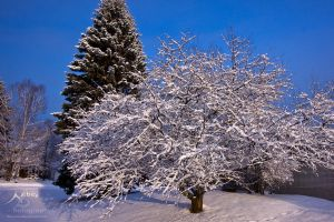 Winter Trees 2 by Nebey