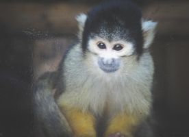 Monkey1 by lucyparryphotography