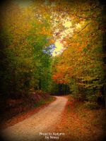 Road to Autumn by niwaj