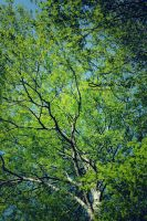 Guide me. by streamline69