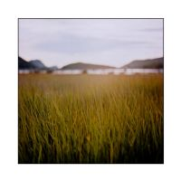 Grasscape by cameraflou