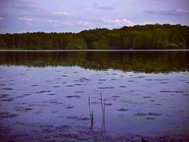 A Postcard from Lake Holly by LAPoetry-n-Photo