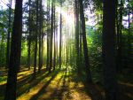 A Forest of these Trees by wagn18