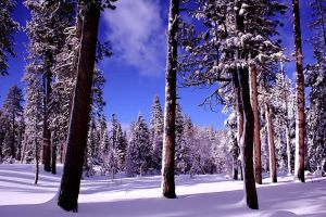 Mount Lassen Winter 2 by thySandcrawler