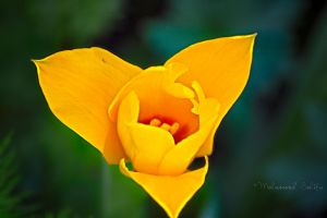 Burst of yellow by DestinyMedia