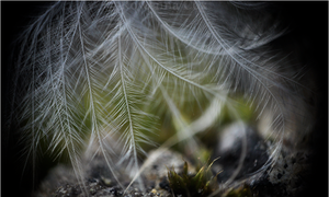 Enlarger III - Feather. by RowennaCox
