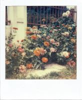 Polaroid country flowers by mike-jack