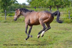 Justification - Stock 10 by Horses--Stock