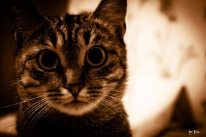 another cat on the net by TrePoint
