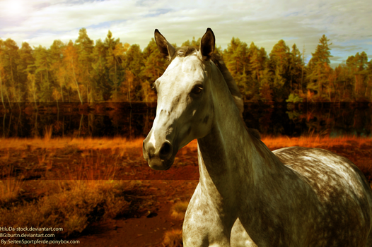 Horse Picture by AntLikeFlower
