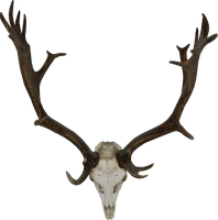 Skull of a reindeer by RavensLane