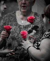 Roses by pmaeck