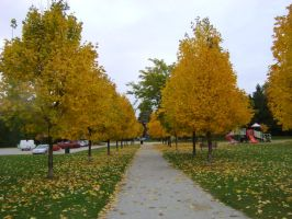 Canadian Fall Colours 47 by Aswang301
