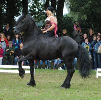removed tack friesian 2 by suuslovertje