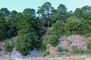 Forested Cliff 04 by fuguestock