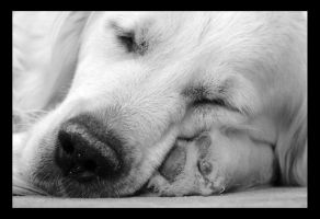 Sleeping dog by Feliciano