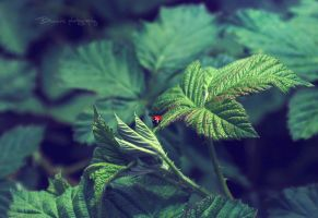 Lonely tiny lady. by Bunnis