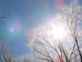 Icy Trees in Natchez, MS by wolfepaw