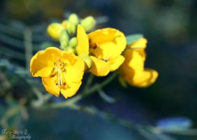 Yellow Flowers by FortySixand2Photos