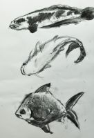 Zoo sketches: 5-minute Fish by ziksan