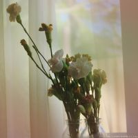 Flowers on the window sill. by Aiyren