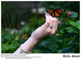 Hand Holding Monarch by Della-Stock