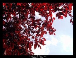 S13-02 The red leaves by iksela