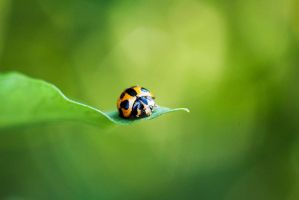 .: Lady Bug :. by meenabug