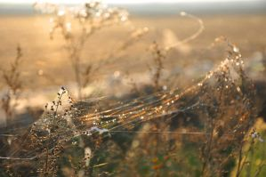webs in the wind by ChipOfMoon