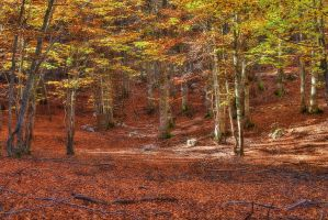 Foliage 2 - HDR by yoctox