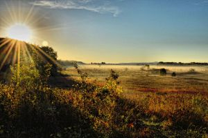 Morning on the Bog by camera-buff