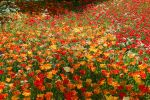 sea of flowers by 1Honey1