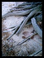 Wasted Roots by Geayzus