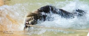 Death Roll by Indefinitefotography