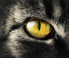 A cat's eye by sisselPhotography