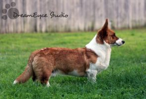 Roy Rogers 12mos by DreamEyce