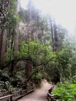 Muir Woods 4 by your-mom--burn