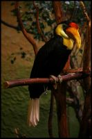 A Toucan in the jungle by Nadine2390