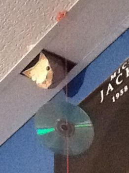 Big Brother Cat on my ceiling by gardenofblueroses