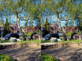 A Stereoscopic Spring In A Street Near Lloyd Park by aegiandyad
