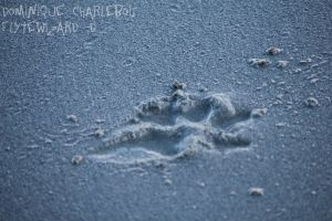 Puppy footprints.. for the weak. by FlyteWizard